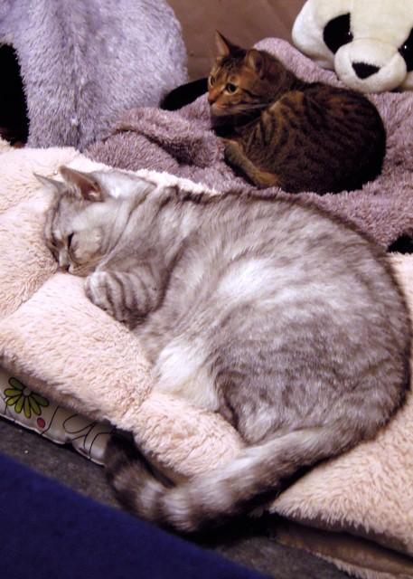 nikon_p300_cats_warm-5.jpg