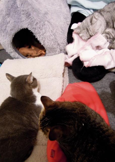 nikon_p300_cats_warm-8.jpg