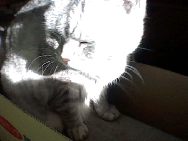 nintendo_3ds_ll_cat_photo_20130206