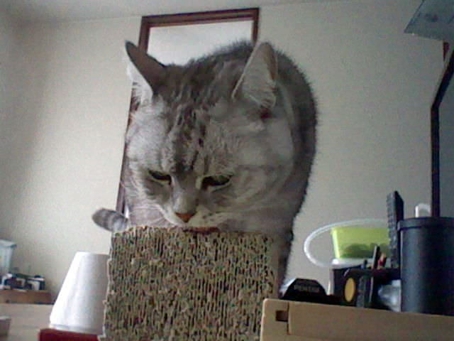 nintendo_3ds_ll_cat_photo_20130218.jpg