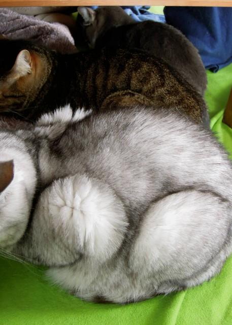 Nikon_P300_cats_warm-10.jpg