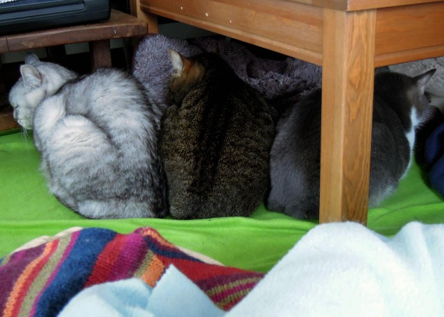Nikon_P300_cats_warm-4.jpg