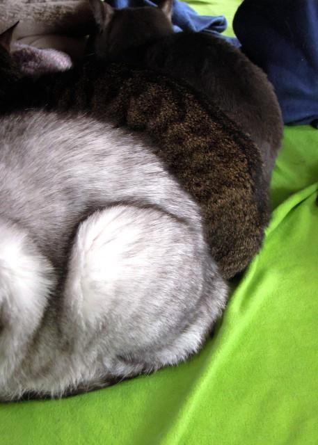 Nikon_P300_cats_warm-6.jpg