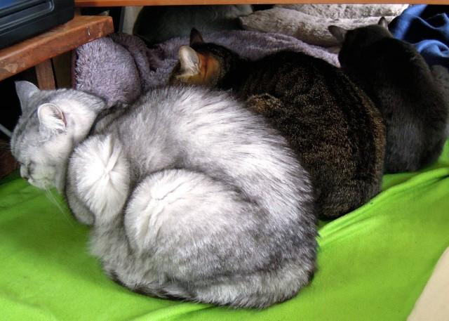 Nikon_P300_cats_warm-9.jpg