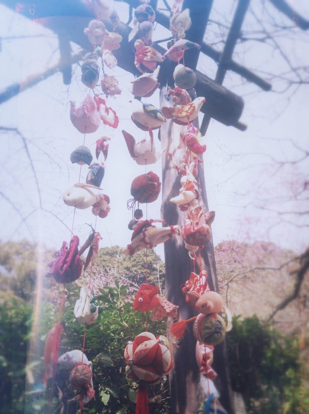 春が来た〜!百草園で梅花見!(iPod touch)