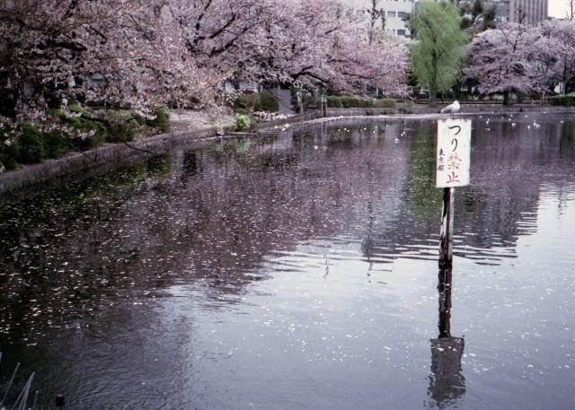 klasse_s_ueno_sakura_2012-2-3.jpg