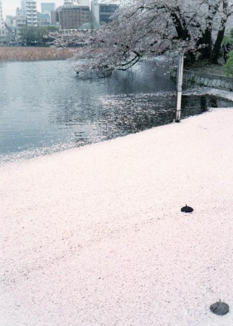 klasse_s_ueno_sakura_2012-2-5.jpg
