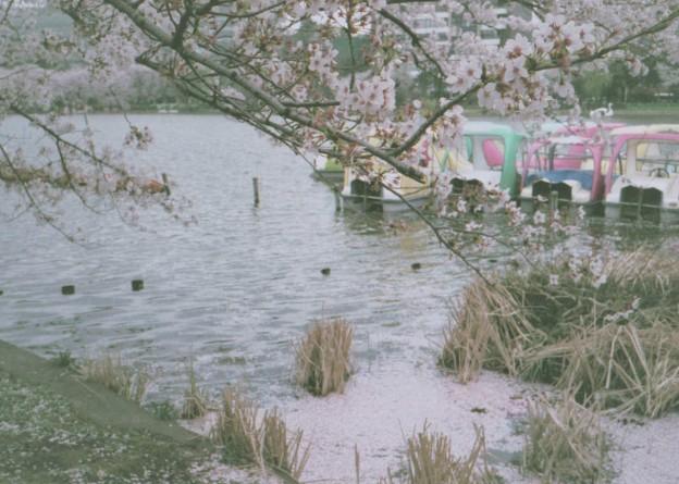 桜の花見ながら不忍池をぐるりと 2(KLASSE S)