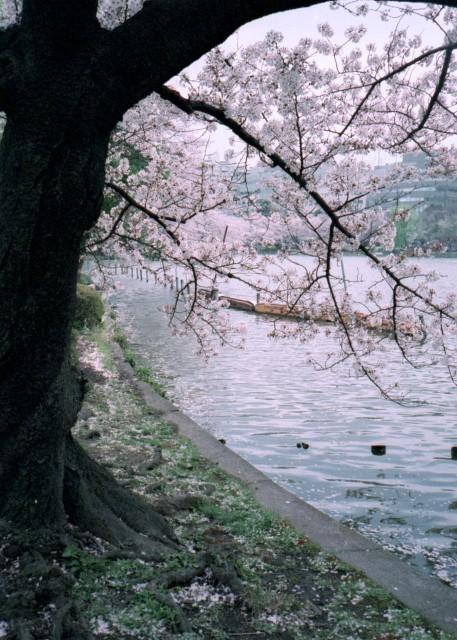 klasse_s_ueno_sakura_2012-2-7.jpg