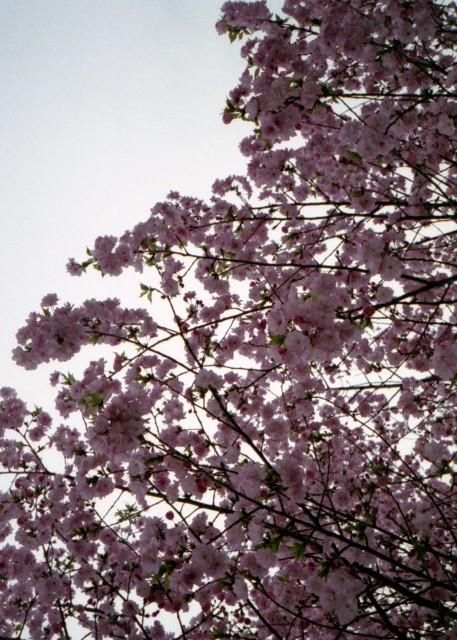 klasse_s_ueno_sakura_2012-8.jpg