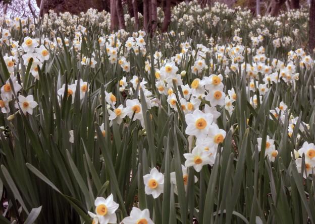 春のびのび百草園 2 (Nikon P300)