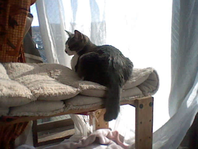 nintendo_3ds_ll_cat_photo_20130316.jpg