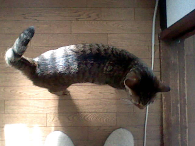 nintendo_3ds_ll_cat_photo_20130321.jpg