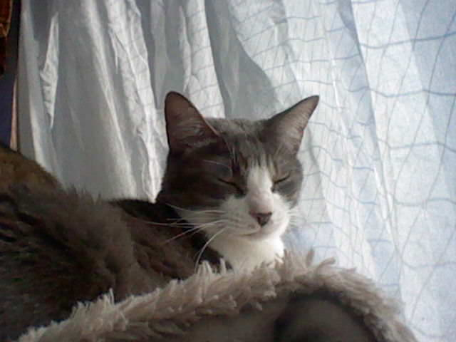 nintendo_3ds_ll_cat_photo_20130329.jpg