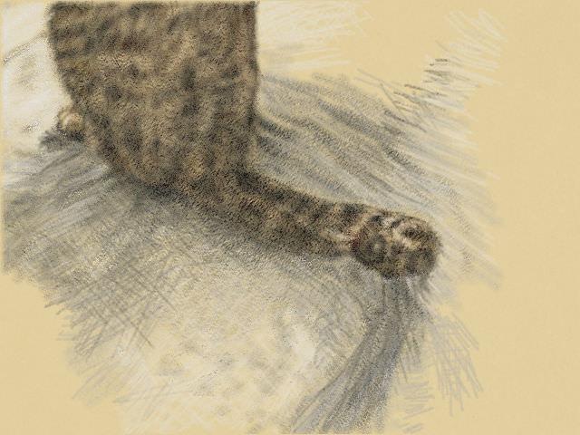 nintendo_3ds_ll_cat_sketch_20130325.jpg