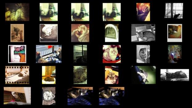 cats_photos_201303.jpg