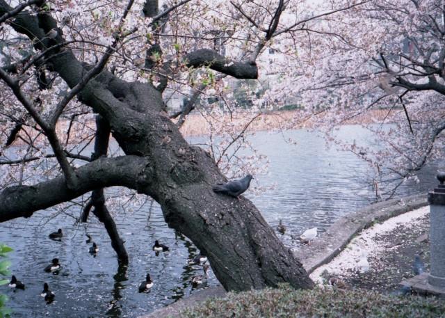 klasse_s_ueno_sakura_2012-3-1.jpg