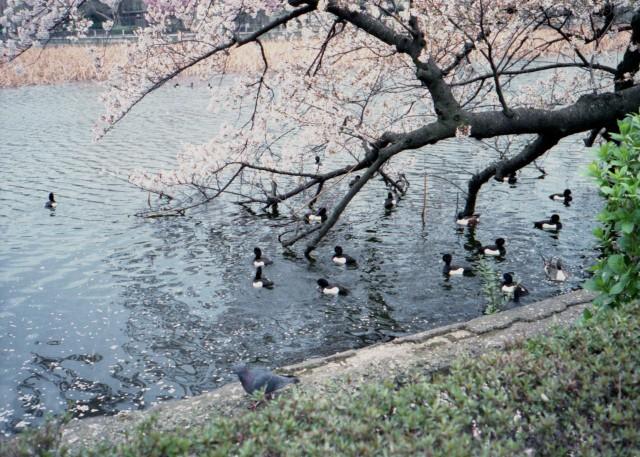 klasse_s_ueno_sakura_2012-3-2.jpg