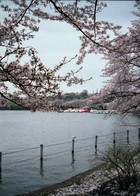 klasse_s_ueno_sakura_2012-3-3.jpg