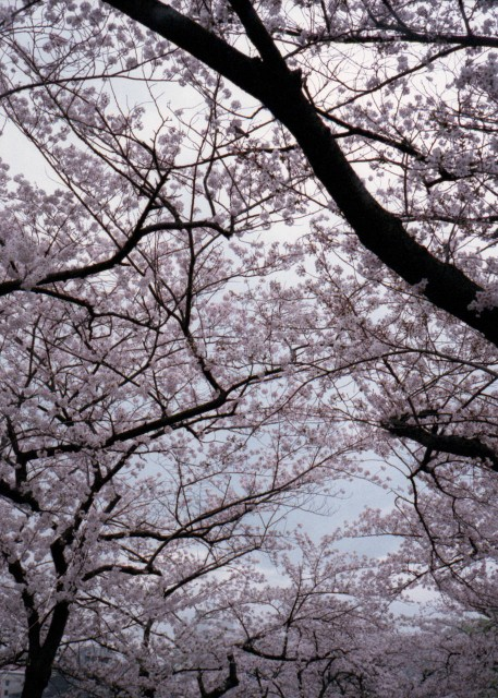 klasse_s_ueno_sakura_2012-3-4.jpg