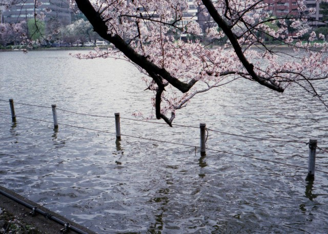 klasse_s_ueno_sakura_2012-3-5.jpg