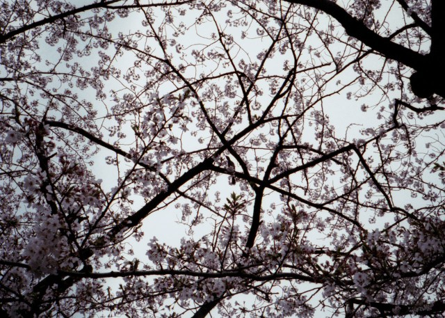 klasse_s_ueno_sakura_2012-3-6.jpg