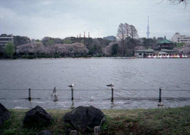 klasse_s_ueno_sakura_2012-4-1.jpg