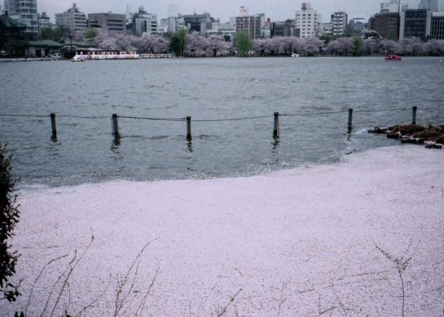 klasse_s_ueno_sakura_2012-4-8.jpg