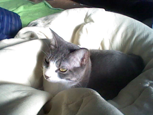 nintendo_3ds_ll_cat_photo_20130418.jpg