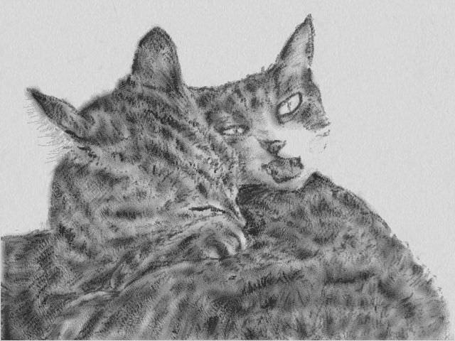 nintendo_3ds_ll_cat_sketch_20130414.jpg