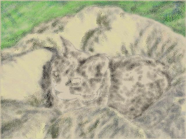 nintendo_3ds_ll_cat_sketch_20130420.jpg