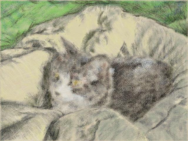 nintendo_3ds_ll_cat_sketch_20130424.jpg