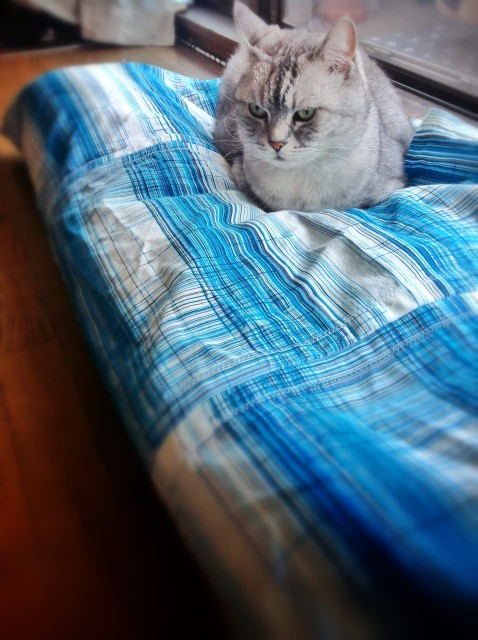 Apple iPad 3rd_cat bed cover-18.jpg