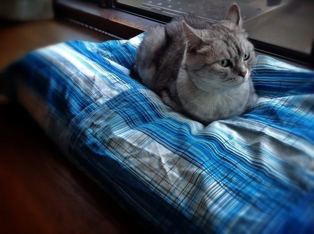 Apple iPad 3rd_cat bed cover-19.jpg