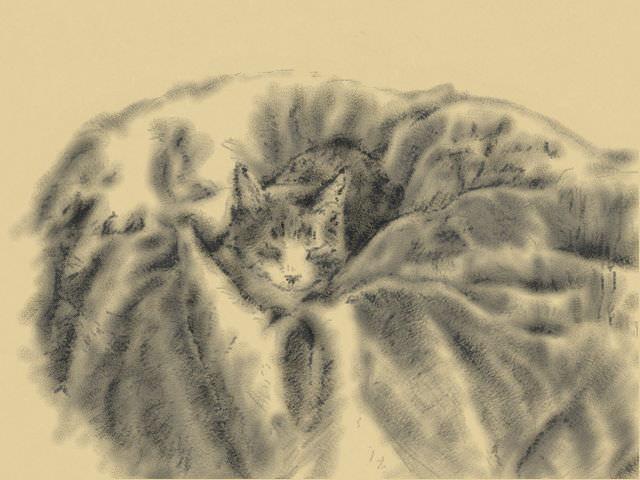 Nintendo 3DS LL_Cat Sketch_20130523.jpg