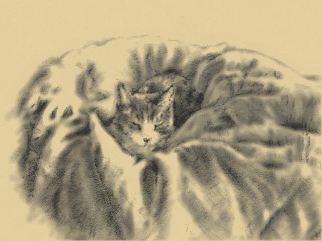 Nintendo 3DS LL_Cat Sketch_20130525.jpg