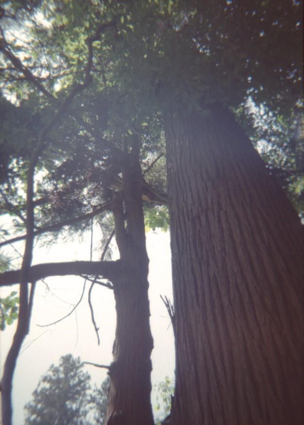 夏のこもれび高尾山 2(プラモデルカメラ)