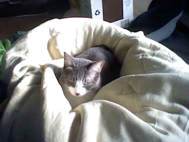 nintendo_3ds_ll_cat_photo_20130430.jpg