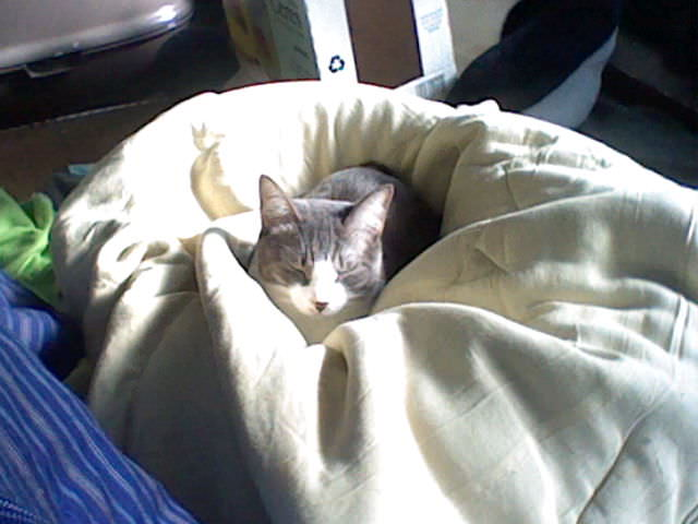 nintendo_3ds_ll_cat_photo_20130510.jpg