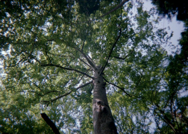 plamodel_camera_takaosan1-3.jpg