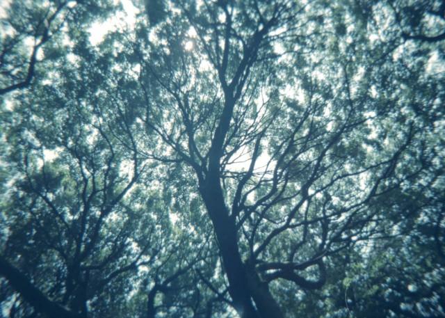 plamodel_camera_takaosan1-7.jpg
