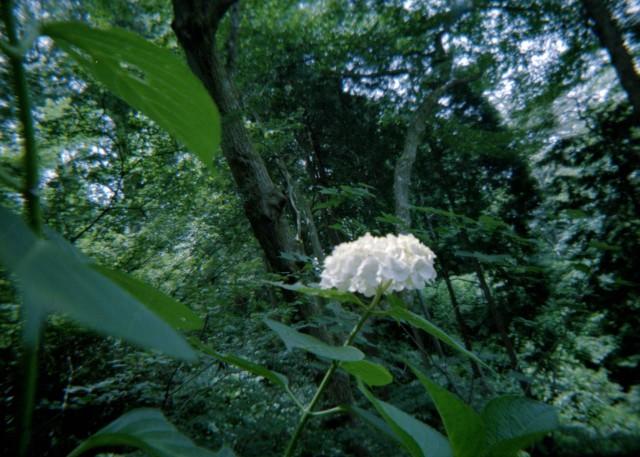 Plamodel Camera_takaosan4-6.jpg