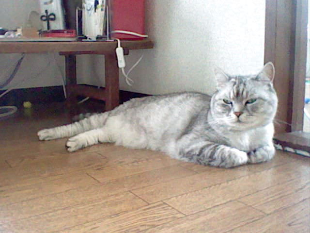 Nintendo 3DS LL_Cat Photo_20130707.jpg