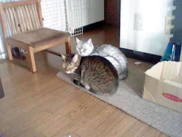 Nintendo 3DS LL_Cat Photo_20130708.jpg