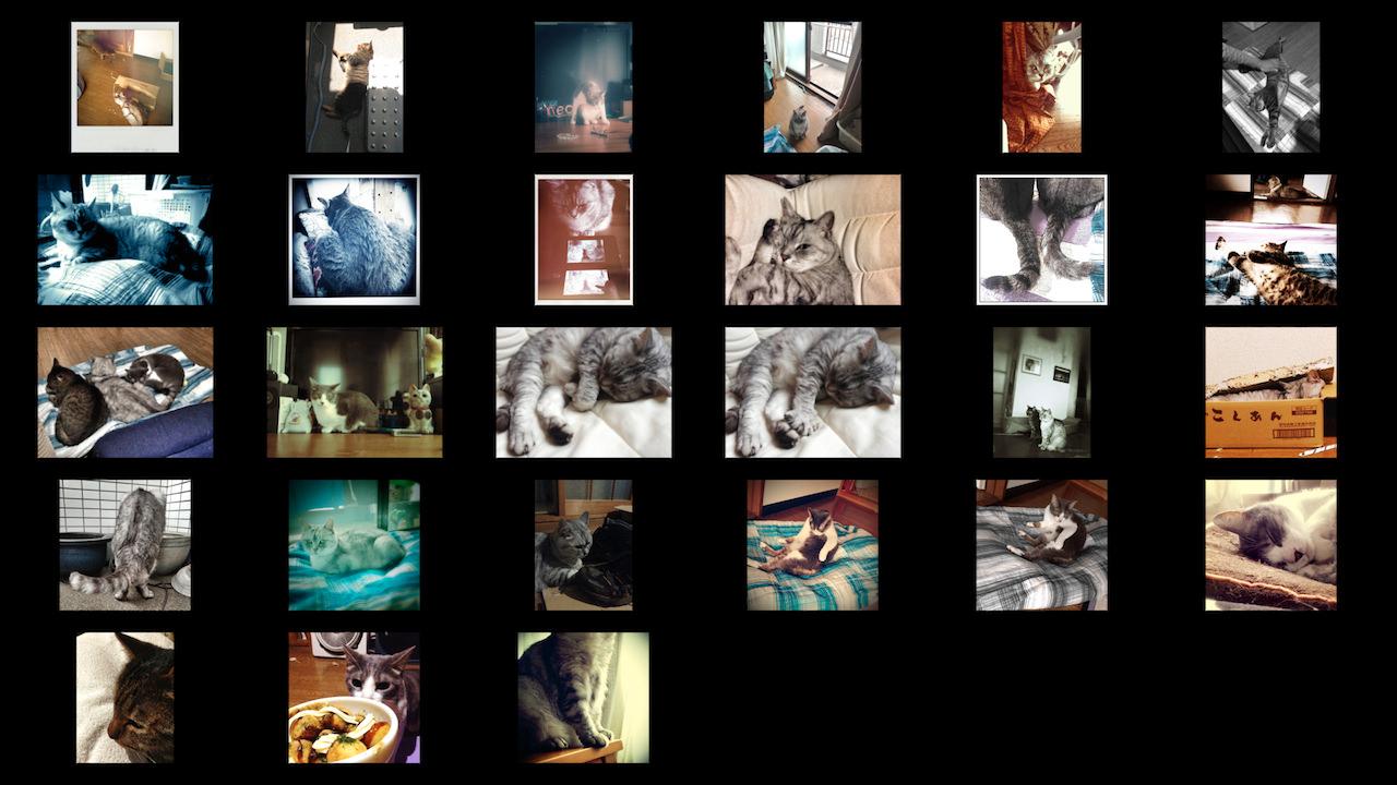 cats_photos_201307.jpg