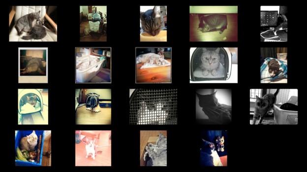 Cat Photo Album_201307.jpg