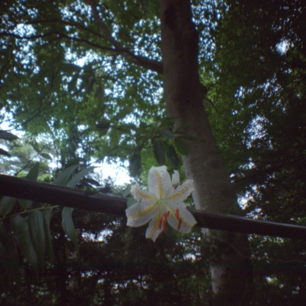 夏のこもれび高尾山 8(Lomography Diana mini)