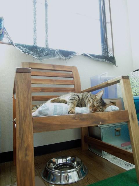 Nikon P300_Summer Cats_1-1.jpg