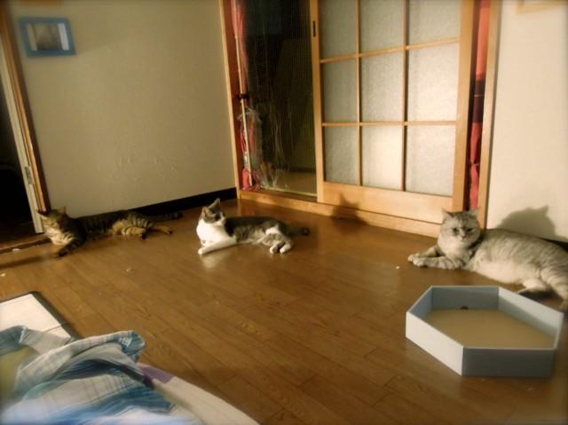 Nikon P300_Summer Cats_1-4.jpg