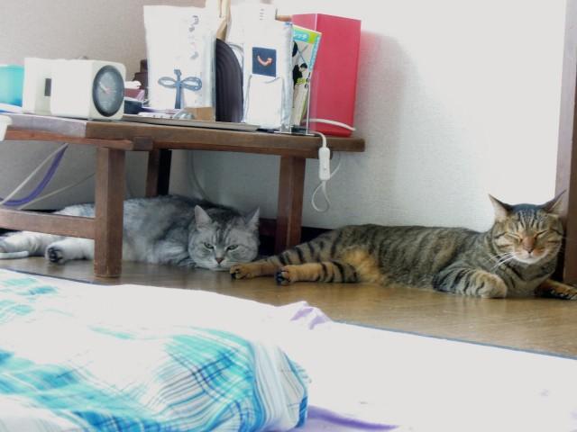 Nikon P300_Summer Cats_1-5.jpg
